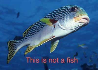 This is not a fish