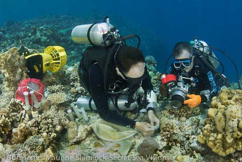 The book's authors at work photographing a new species in Cendrawasih Bay.  Photograph: Jones/Shimlock. Secret Sea Visions/Conservation International.