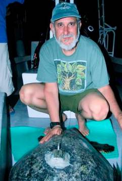 Todd Steiner and tagged turtle