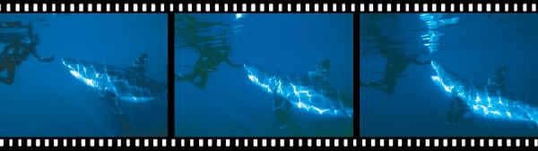 Shark Contact