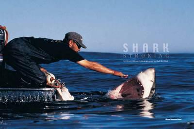 Shark Stroking