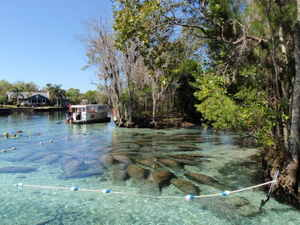 Three Sisters Manatee Refuge, photo by Capt Stacy Dunn