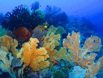 Gorgonians Galore