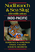 Nudibranch and Sea Slug Identification: Indo-Pacific