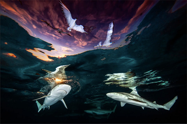 Renee Capozzola, Underwater Photographer of the Year