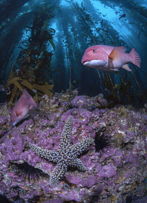World Oceans Day Photo Competition Winners
