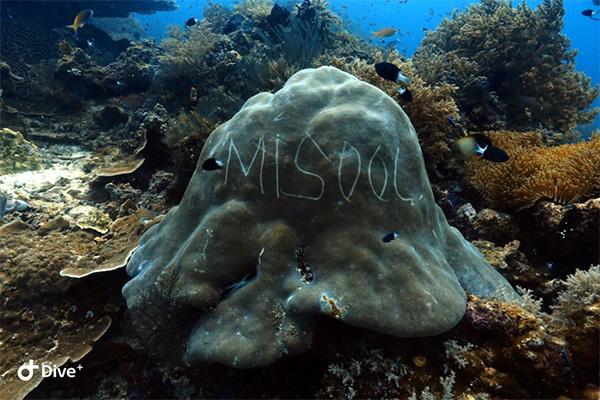 defaced hard coral bommie in Raja Ampat