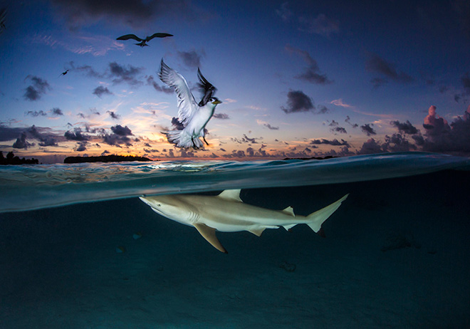 World Shootout underwater photography competition