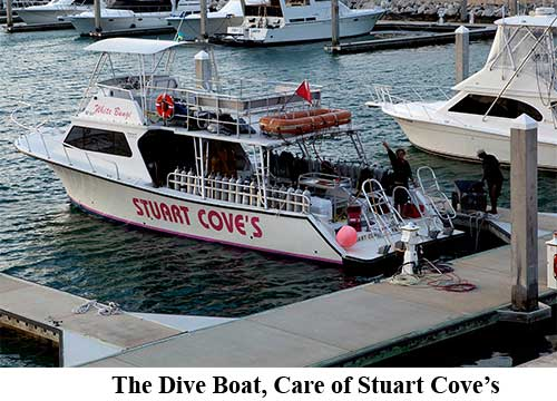 The Dive Boat, Care of Stuart Cove's