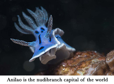 Anilao is the nudibranch capital of the world