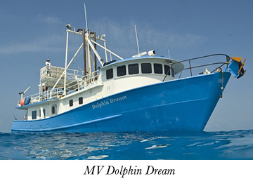 MV Dolphin Dream