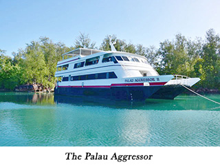 The Palau Aggressor