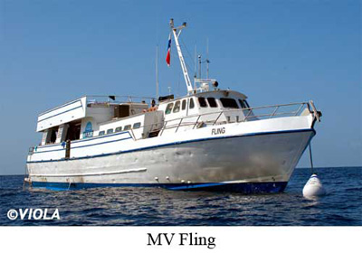 The MV Fling Is No Damai, Dancer Or Aggressor, But The Gulf Of Mexico Is No  Red Sea, Either. Docked In Freeport, TX, About 60 Miles South Of Houston,  ...