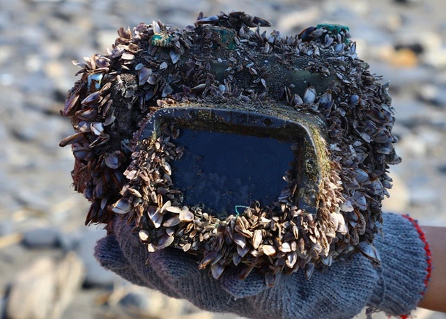 a barnacle-covered camera housing