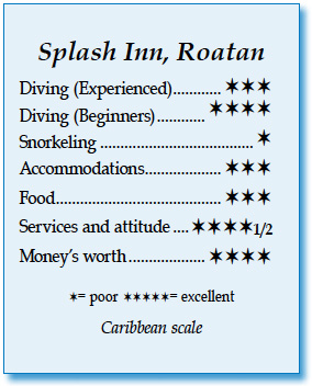 Splash Inn's rating