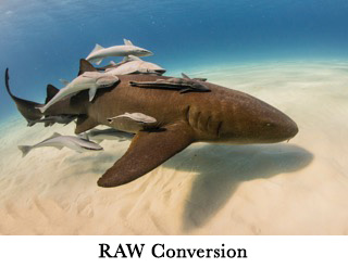 Raw Conversion image
